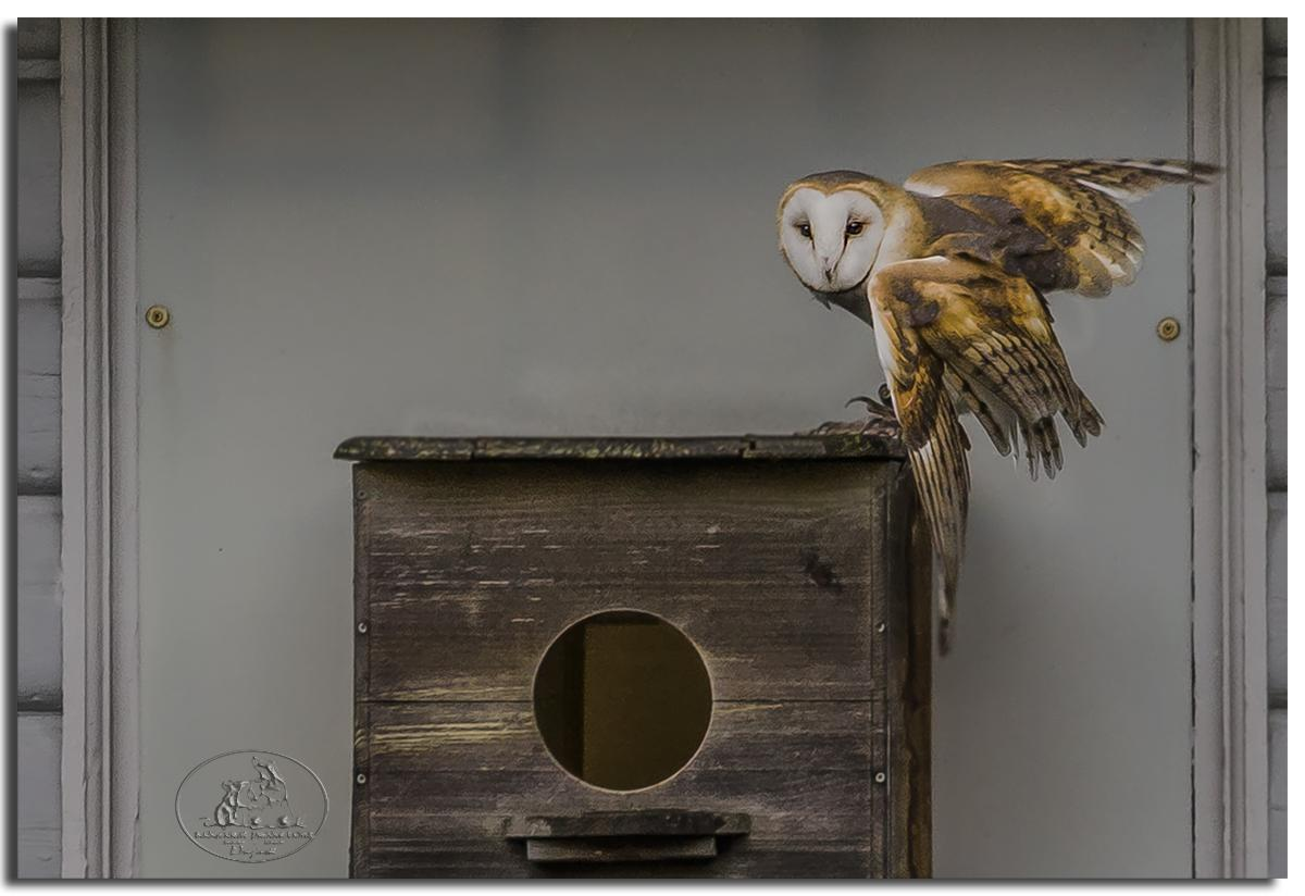To the nesting box