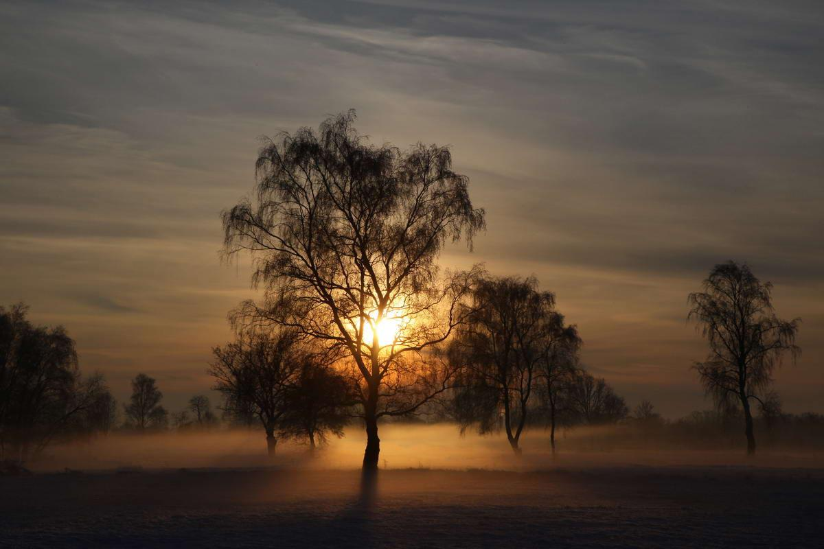 Sunset, trees and fog