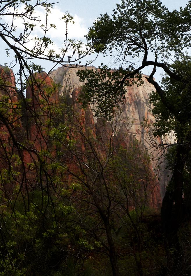 Zion:  In the Canyon