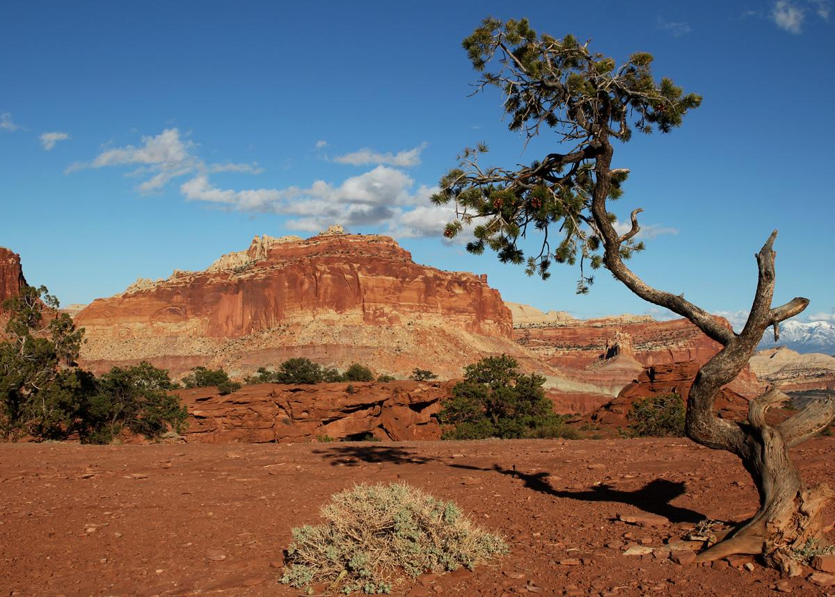 Capitol Reef:  Triassic Geology