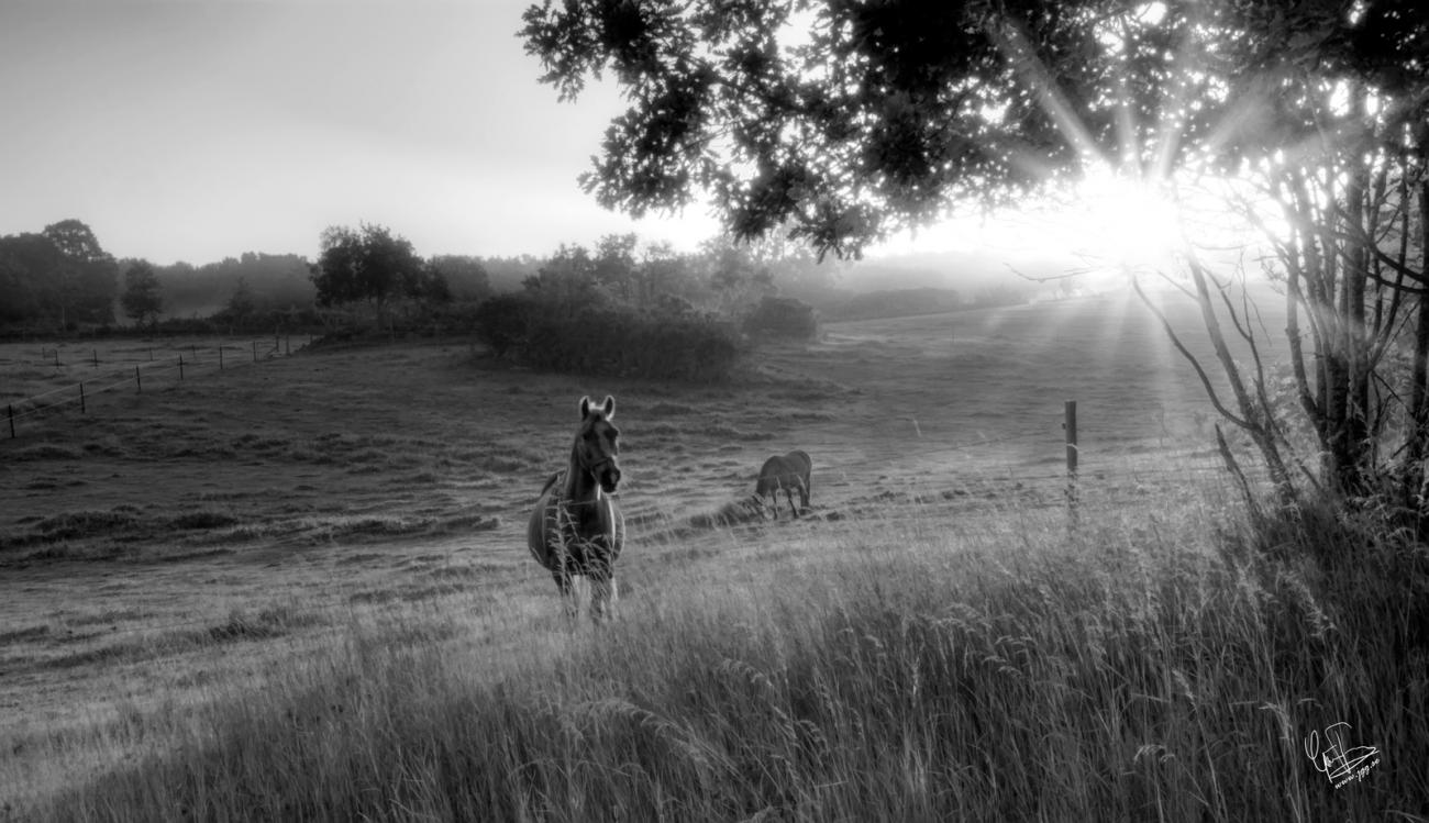 Sunrise at the pasture by Junglegeorge