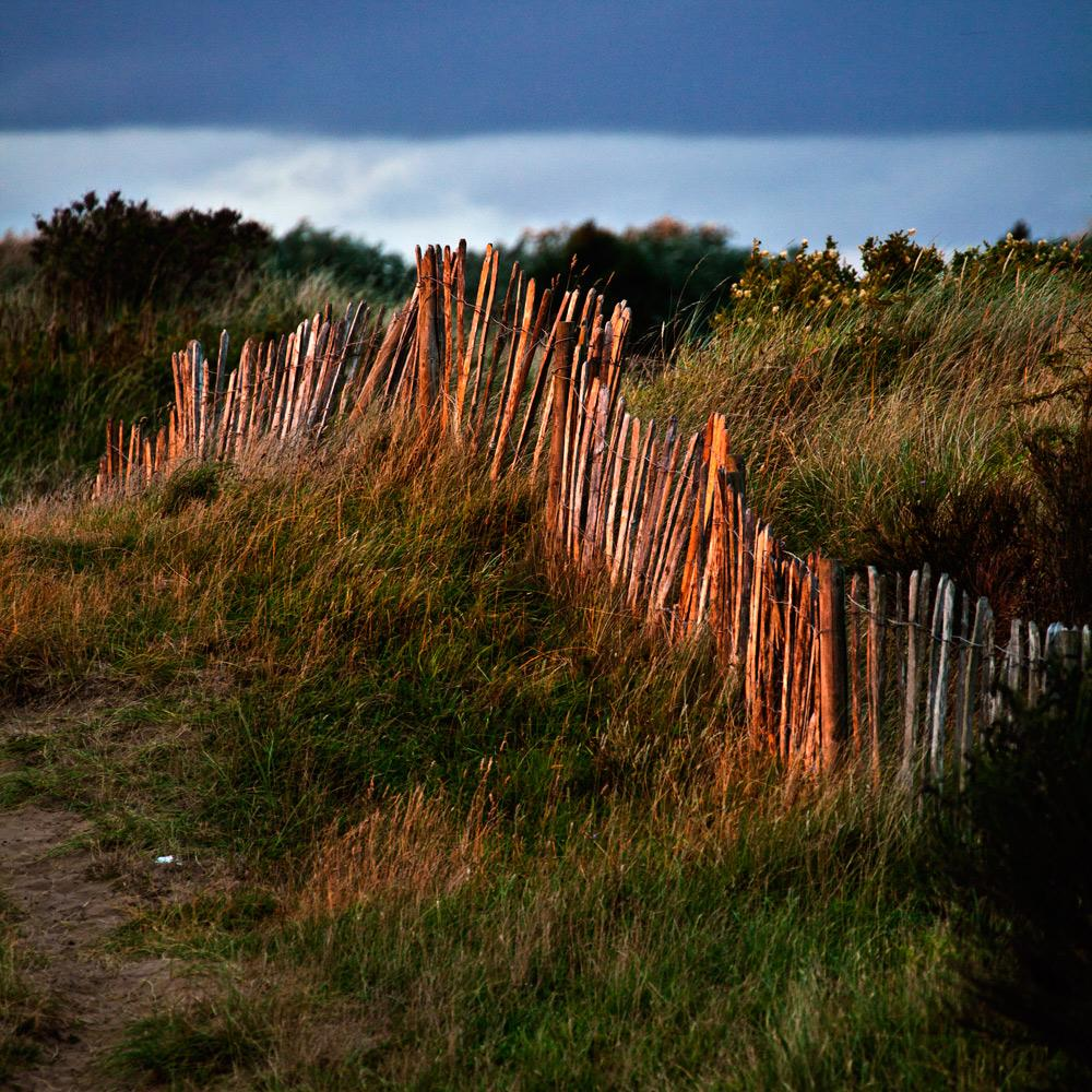 Evening-Light-on-the-Dunes