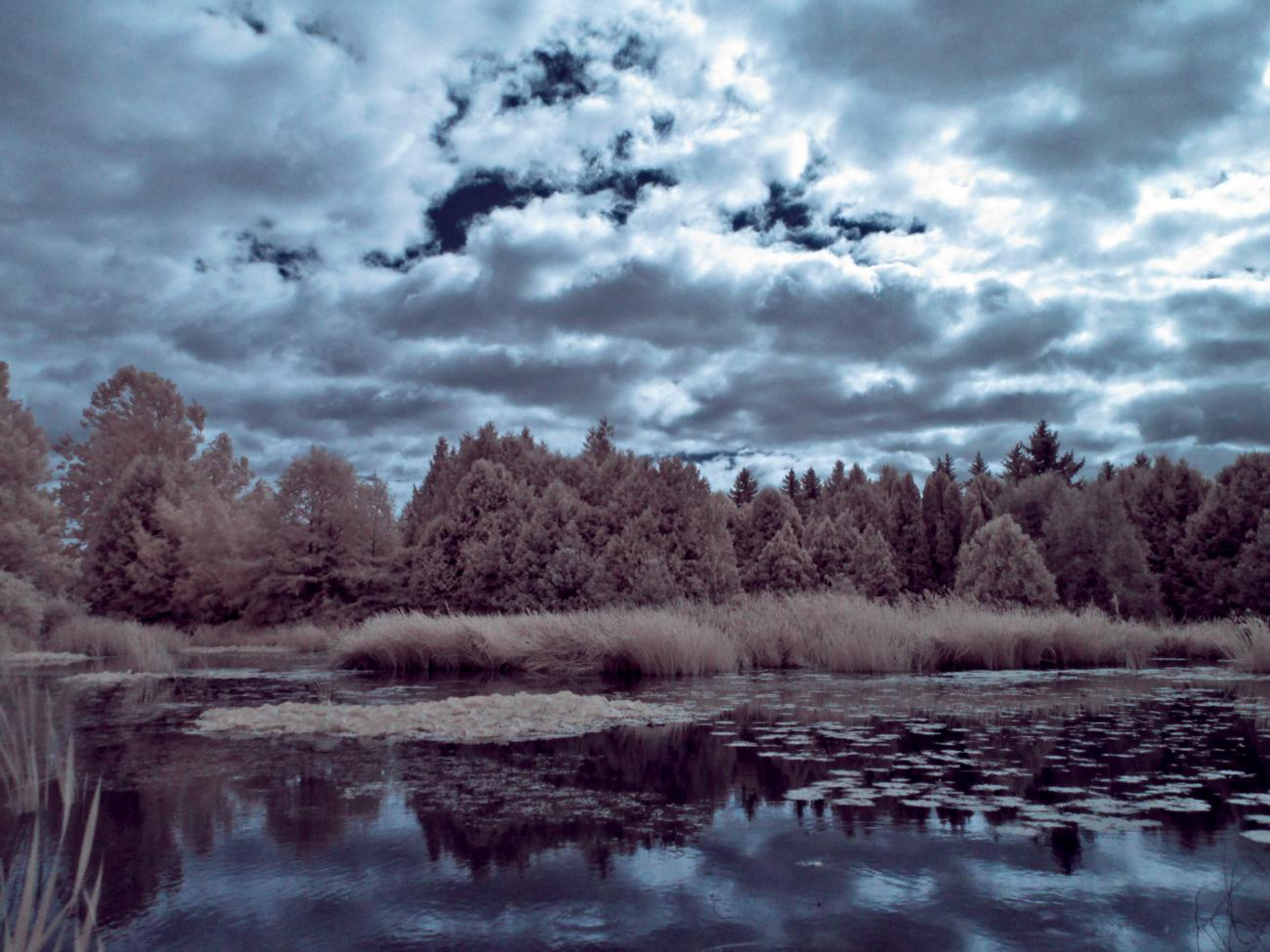 The Pond IR