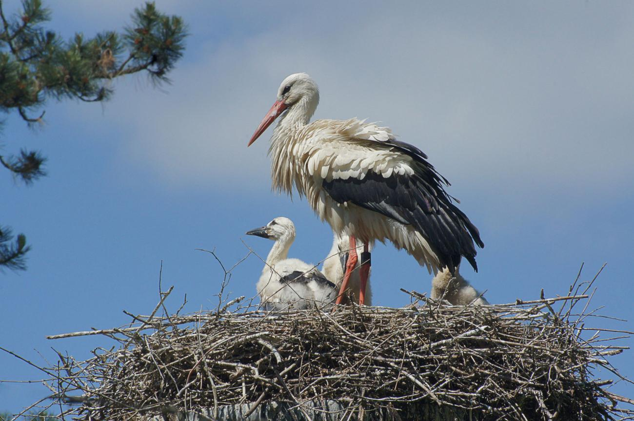 stork chronicles continue??