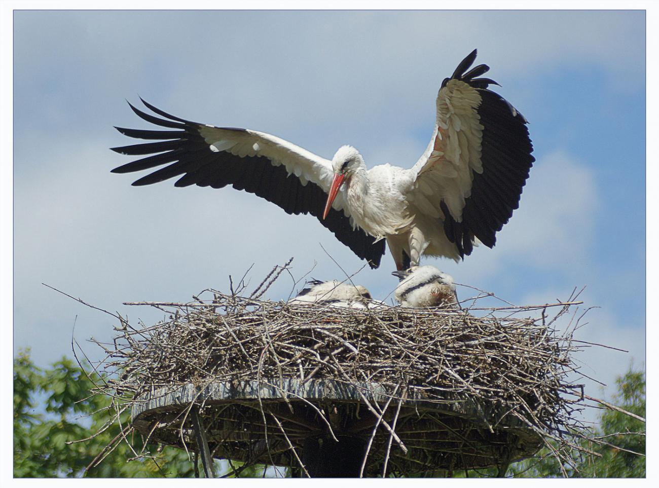 peace be to this nest!