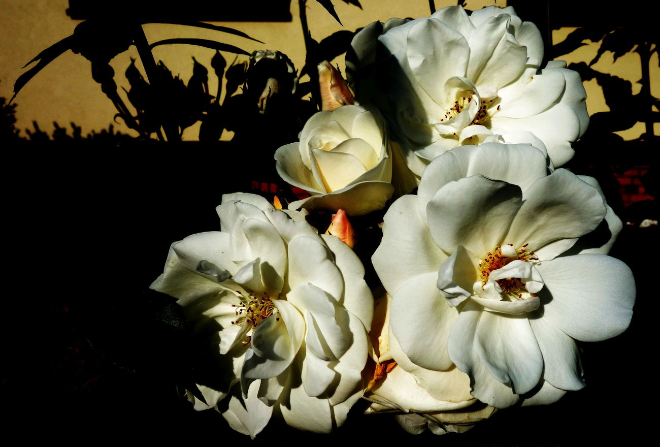Some white blooms #10 ...
