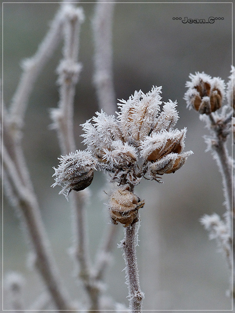 Frost and fog (3): Winter bouquet