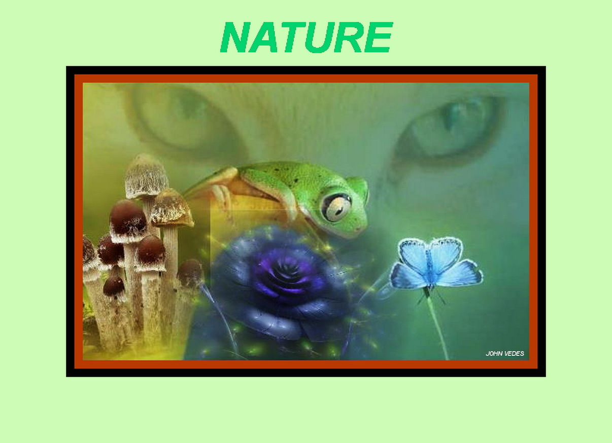 NATURE by VEDES