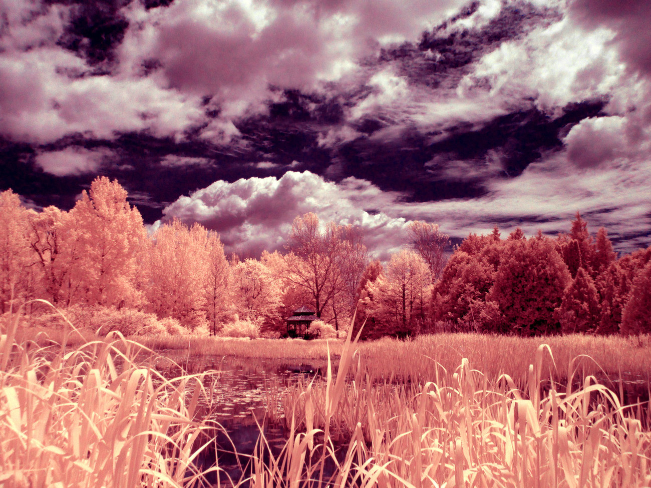 The Pond IR Bis