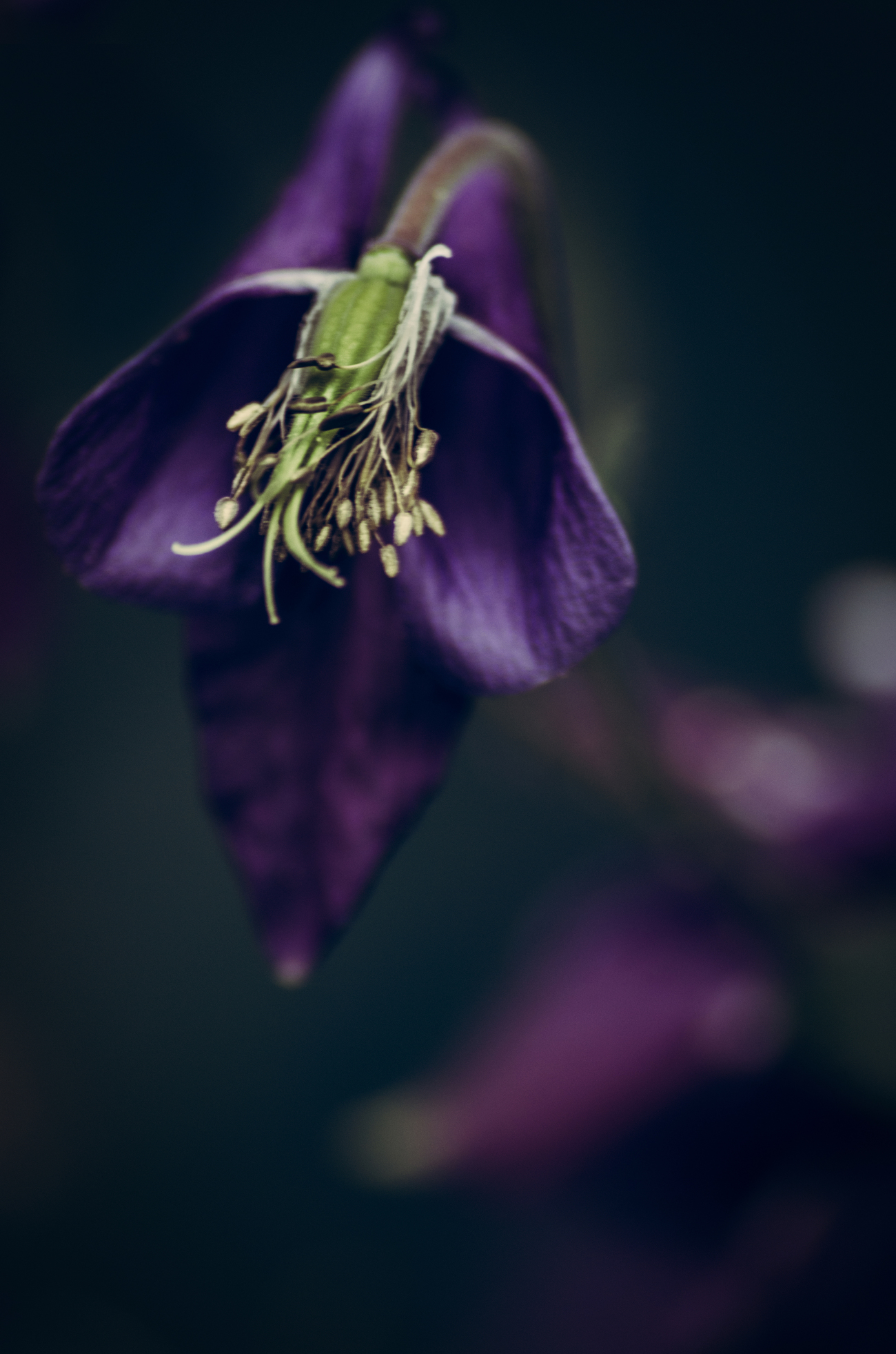 Another Gothic Flower ;)