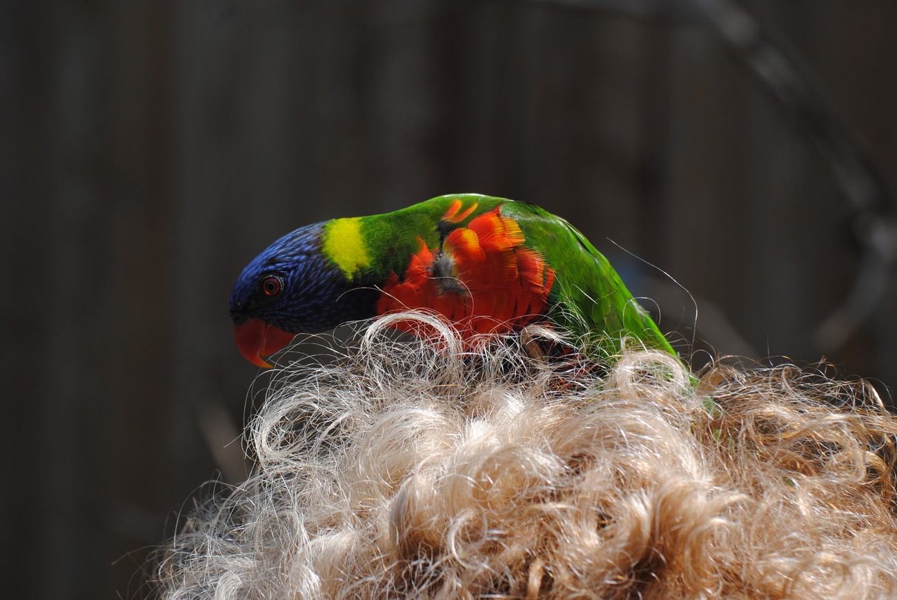 A bird in hair