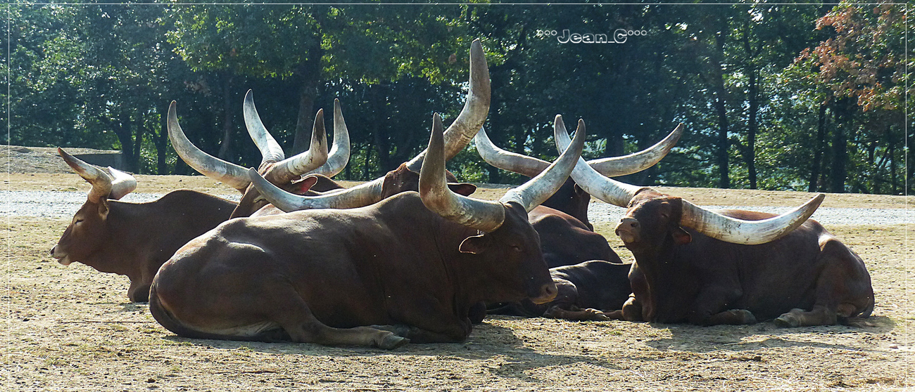 Horns by Jean_C
