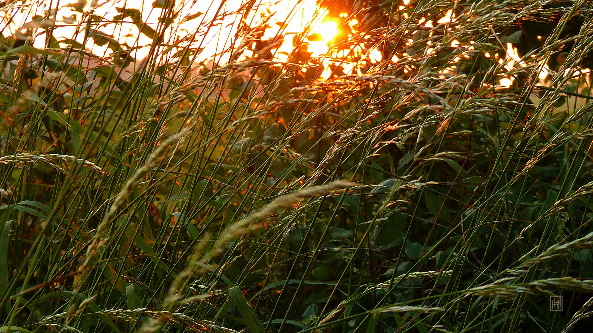 June Sunset over the Field 2