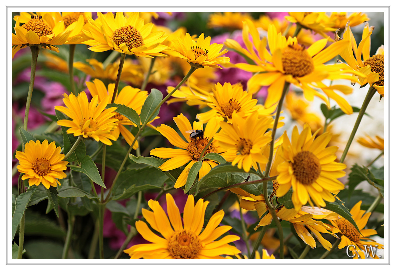 Yellow Flowers By X Pax Photography Flowersplants