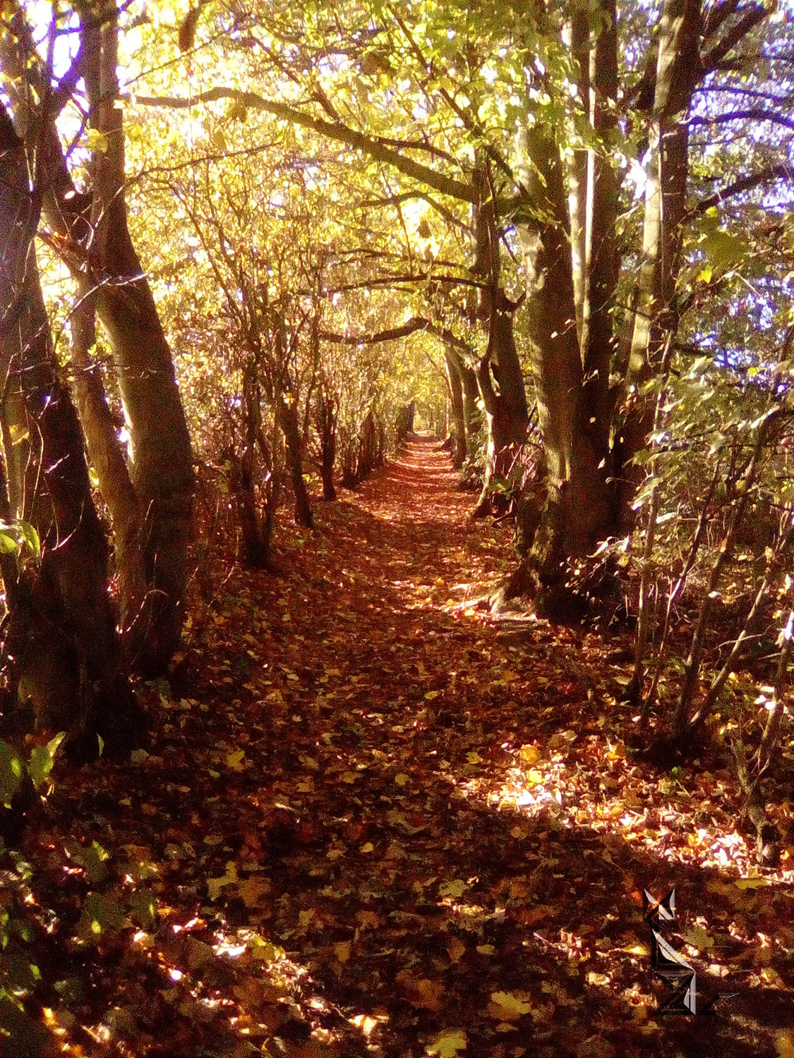 Autumn tints in 'Dingley Dell'