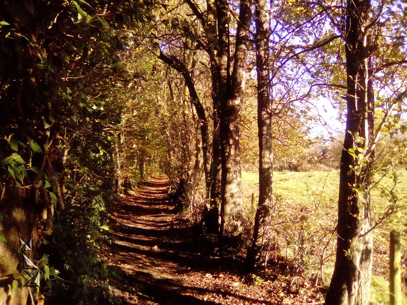 Dingley Dell path 3 (last)