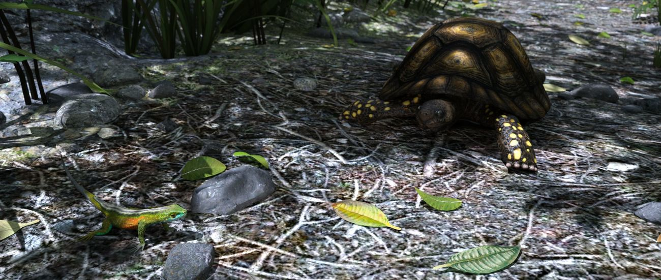 Rainbow Whiptail and Yellow-footed Tortoise