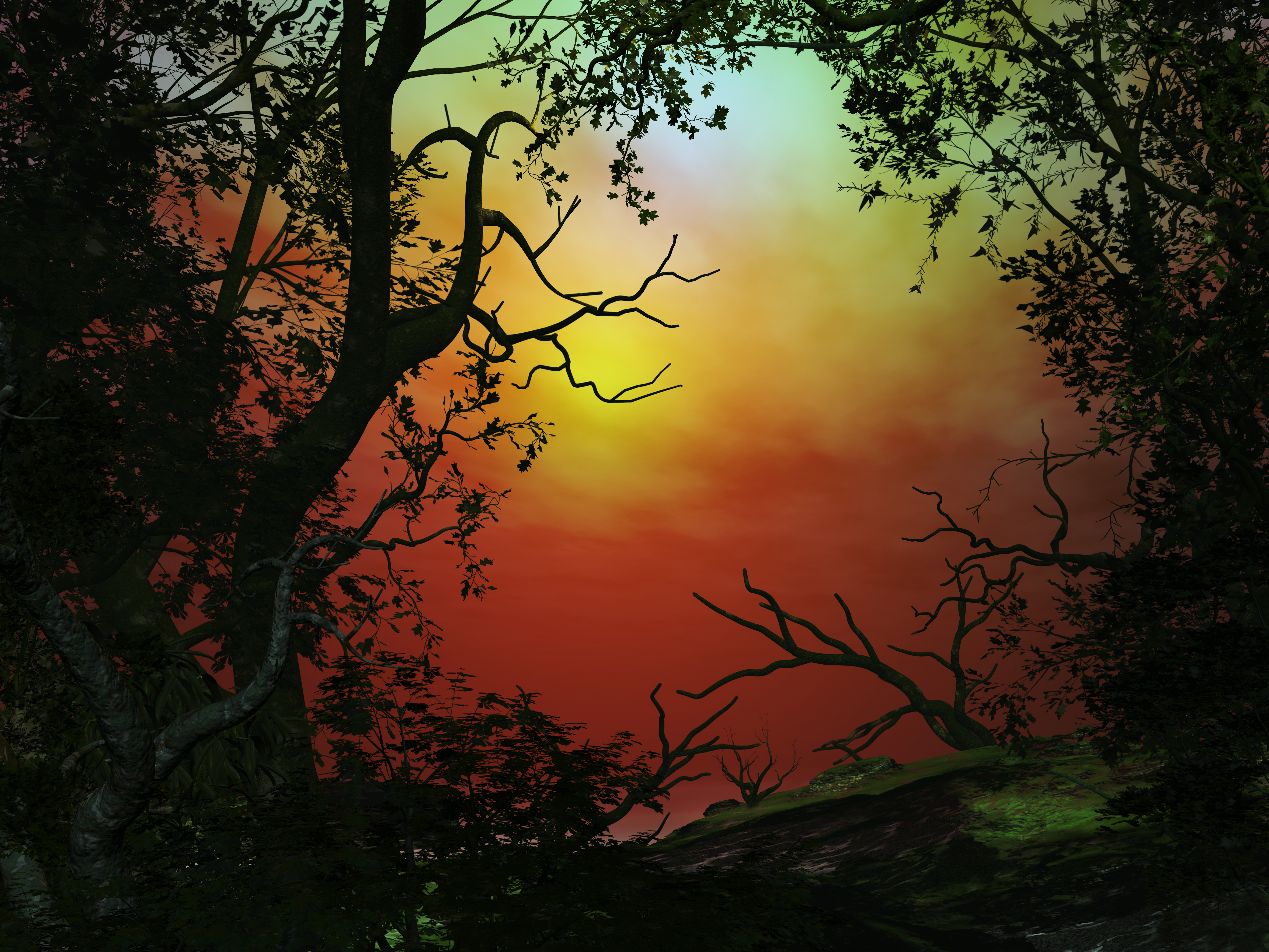 Sunset in the Woods