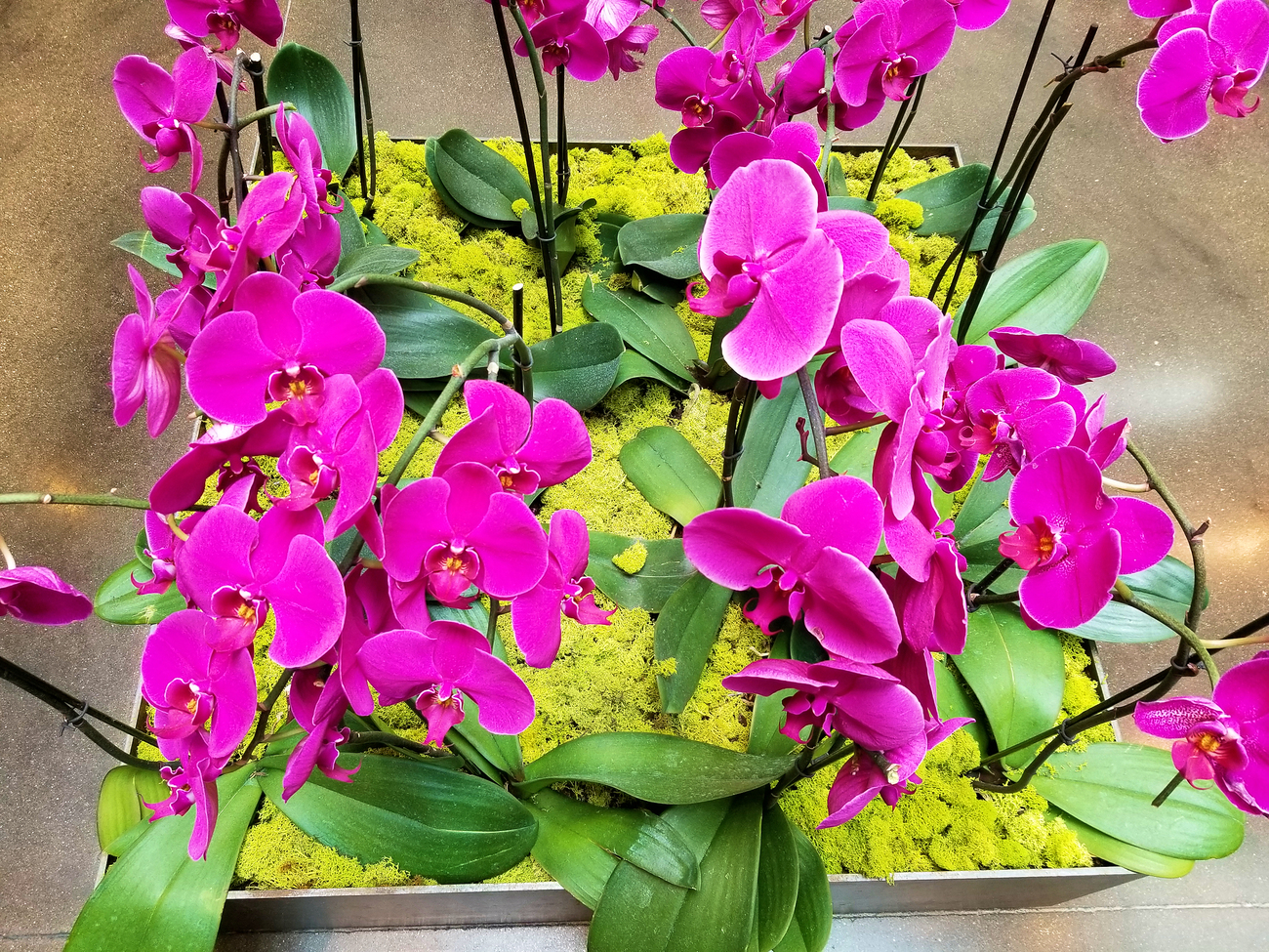 orchids  in a mall
