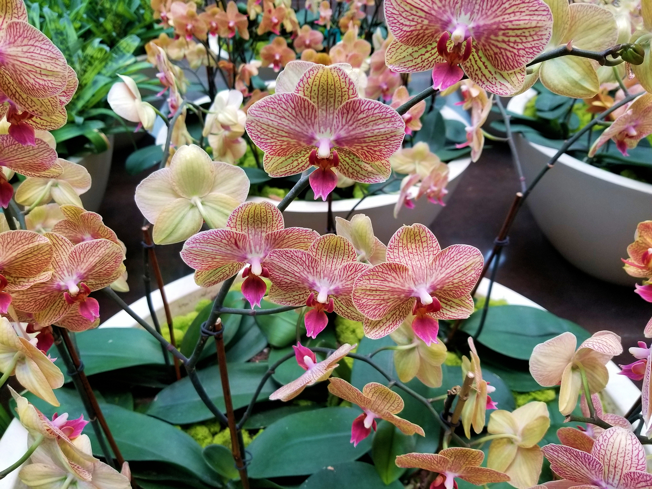 more mall orchids