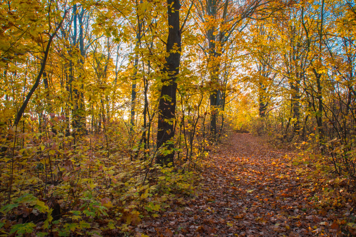 Golden october by 1971s