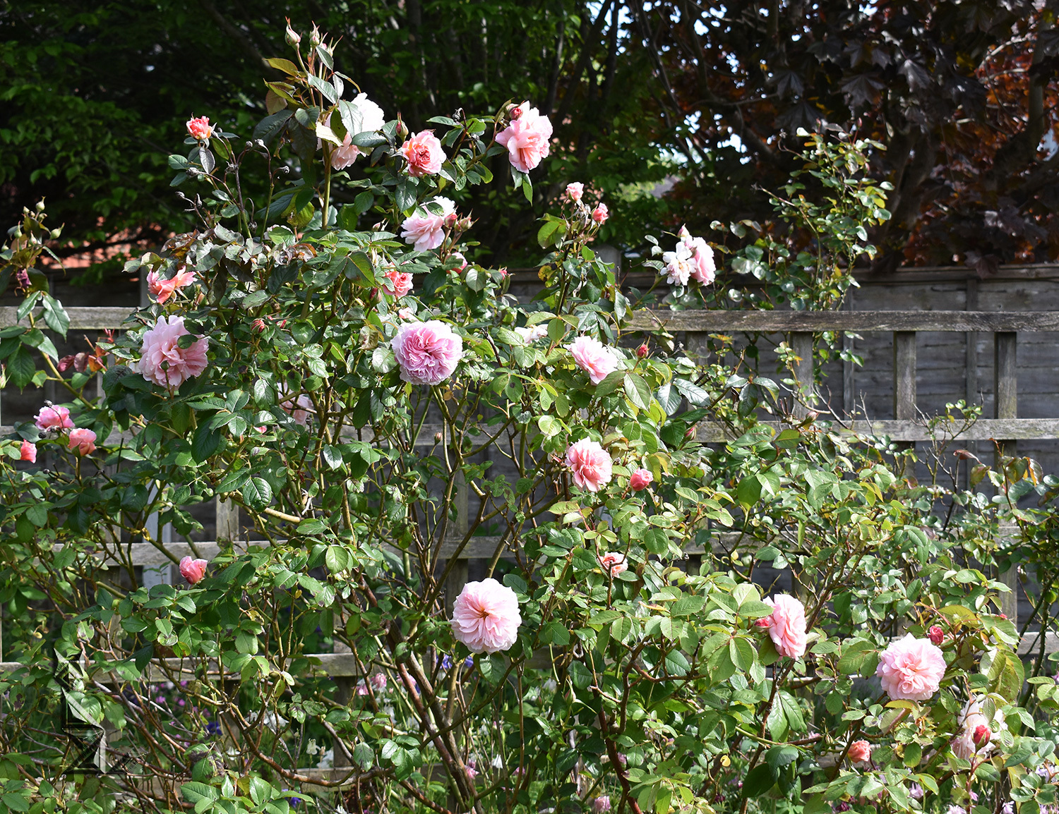 and (last one ) A Shropshire Lad (3)
