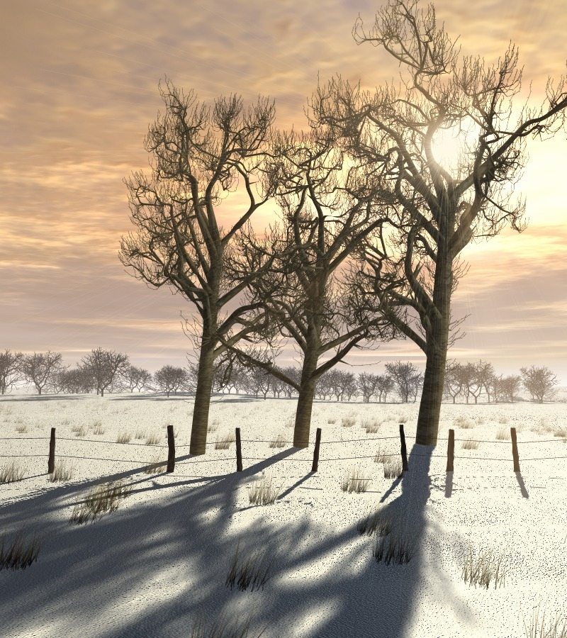 Cold day in december by Alfons